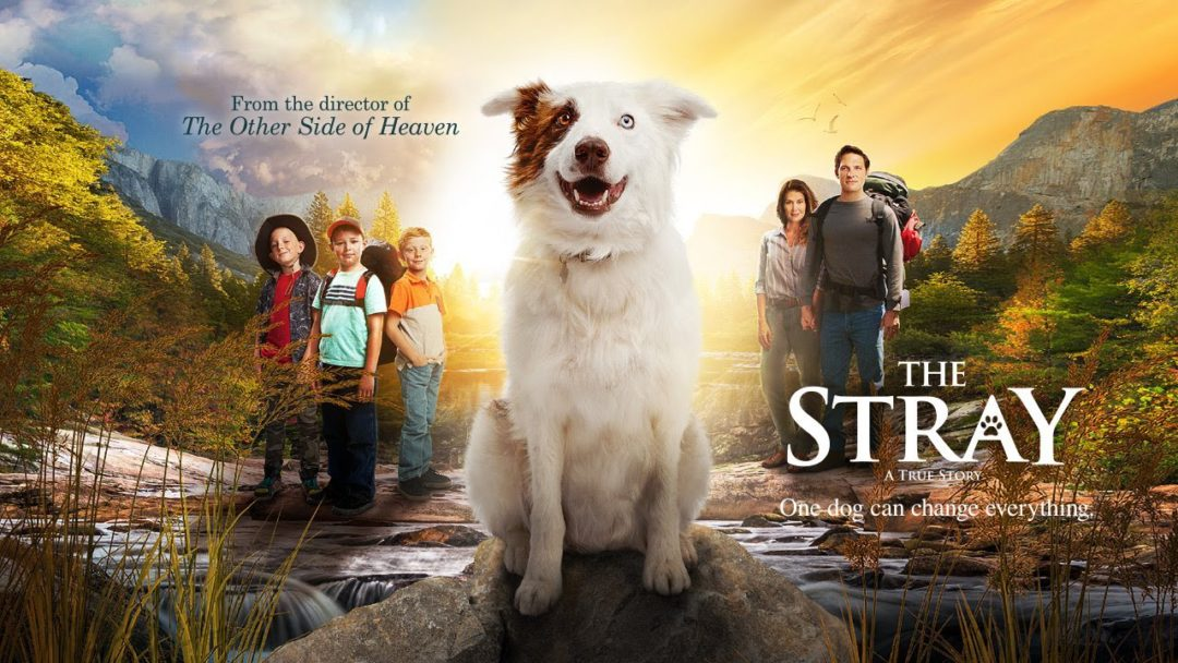 'The Stray' movie for the whole family. family in 'The Stray'